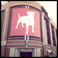 Morning Zynga by Tithos