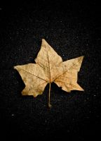 Leaf on footpath by parablev