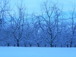 Orchard of Snow by Apixienamedboo