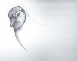 Preview of Blue Jay Sketch (INCOMPLETE) by Flight-Level
