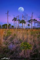 Moon-Over-Florida-Landscape-at-Wetlands by CaptainKimo