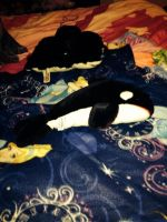 Sea World Shamu Plush by SoniatheHedgehog365