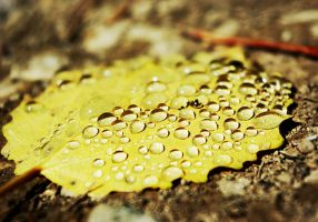 Automne by My-Life-Without-Hair