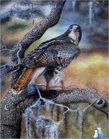 Red-tailed hawk by calie4ever28