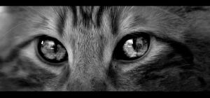 See. Eyes. by Almy