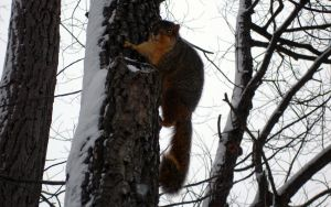 Crazy Squirrel by rotbearer