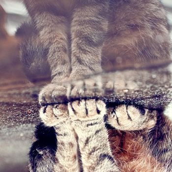 Wet Paws. by TinaApple