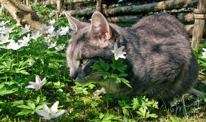 Does this flower go with the colour of my fur? by RavenMontoya