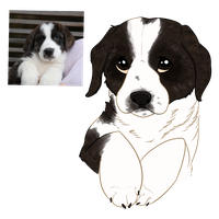 St. Bernard Puppy by Ribbon-Wren