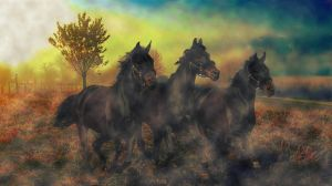 In the morning gallops by poisen2014