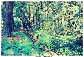 Magical Forest by DusterAmaranth