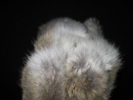 Rabbit Fur 16 by TRANS4MATICA