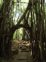 Manoa Fall's Tree Gate by rioka
