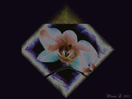 abstract orchidee by oli-one