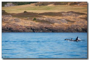 Orca Farming by ricmerry