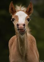 .filly. by awphotoart