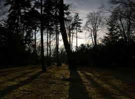 Shadow play by positively