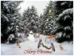 Christmas Card Design 2011 by Lookn-4-Beautiful