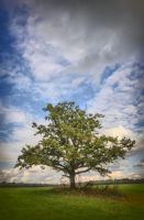 Old Oak in Color by xrust