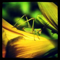 Grasshopper 1 by TropicalxLondon
