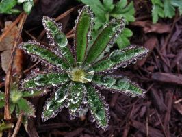 Raindrop Covered Plant by Matthew-Beziat