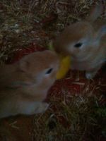 Baby bunnies by Kayleigh-Kaz