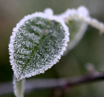 Frosty morning 8 by bmh1