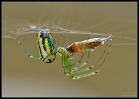 Spider and Mosquito I by EricTonArts