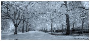 white autumn,    Infra red by thembo