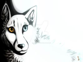 Contrast for Follow-my-pawprints - AT by Laura-comics
