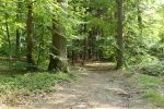 Forest Stock 077 by Malleni-Stock