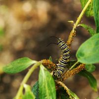 Caterpillar vs Aphids by KBeezie
