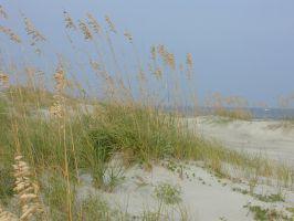 Ocean Dunes by JennyM-Pics