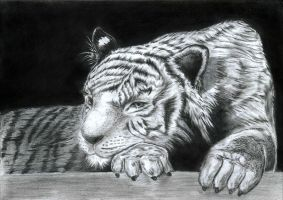 Lonely tiger by irmaodeakasha