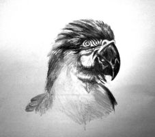 Macaw WIP Pencil by Lynne-Abley-Burton