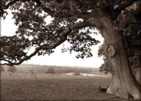 Old Witchy Tree by Estruda