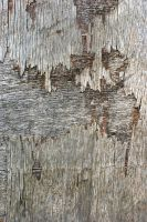 Damaged plywood by s-i-nthetic-dreams