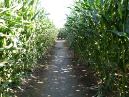 Maze of Maize by Kcook6