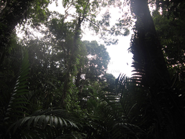 Borneo Rainforest by Sapphiresenthiss