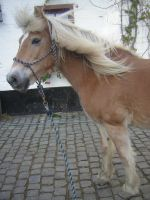 little photoshoot of my horse by astridlover