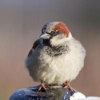 Beautiful sparrow by MadGrass