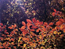 .:.Autumn Leaves.:. by Ailedda