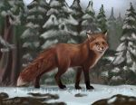 The Fox by NatsumeWolf