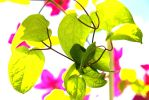 colourfull leaves by Oussika