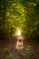 Autumn with poodle by aleksandrossa