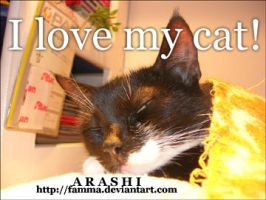 I Love My Cat by famma