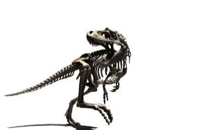 Large T-Rex Skeleton Wallpaper by tacostandwallpapers
