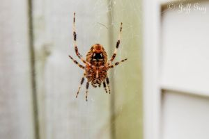 Project 365 - 264 - Web Crawler by jguy1964