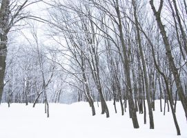stock: winter forest 2(credit and show the result) by amka-stock