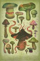 The Fungus Kingdom by V-L-A-D-I-M-I-R